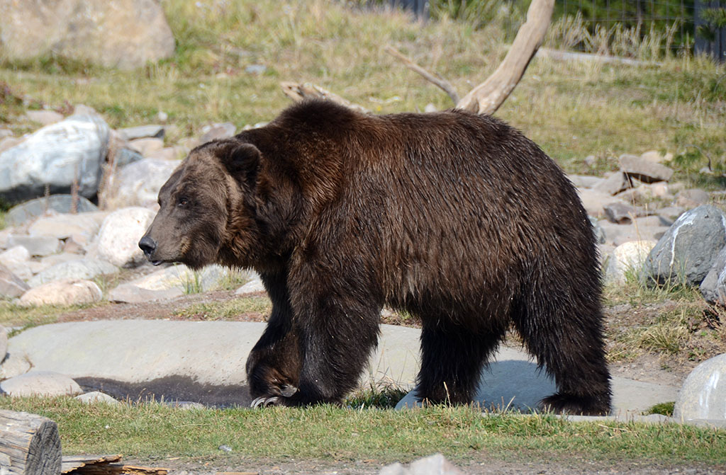 ?image=Animals/bear-62014.jpg