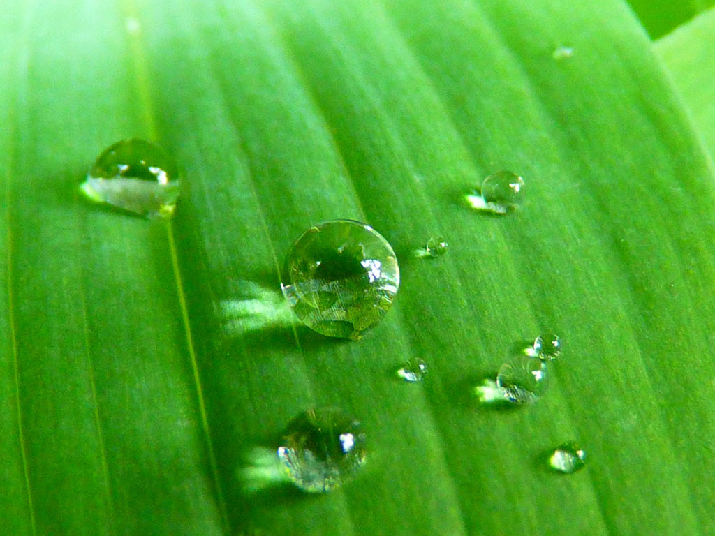 ?image=Nature/waterdrop-7723.jpg
